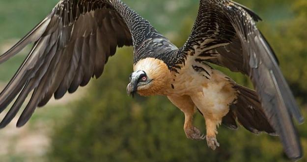 10 Burung Paling Berbahaya Di Dunia