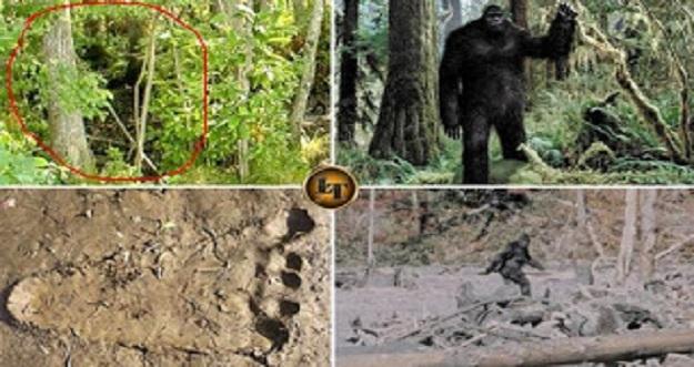 Penampakan Bigfoot Di Indonesia Yang Membuat Heboh