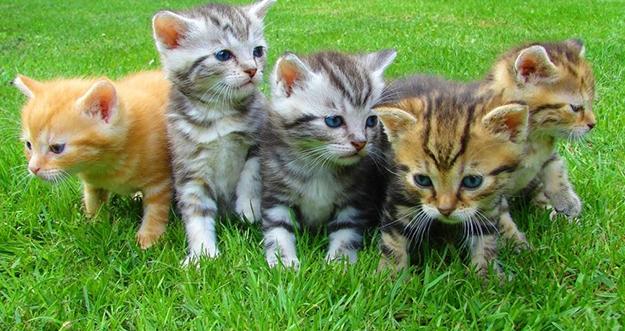 6 Penyakit yang Dapat Ditularkan Kucing pada Manusia