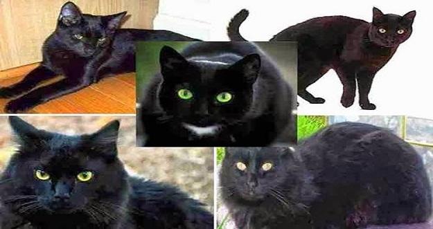 8 Mitos Kucing Hitam Dari Berbagai Negara Di Dunia