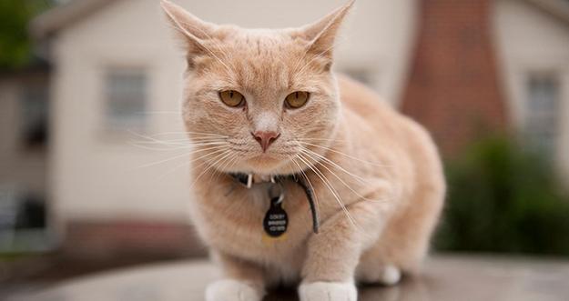 Manfaat Memelihara Kucing Di Rumah