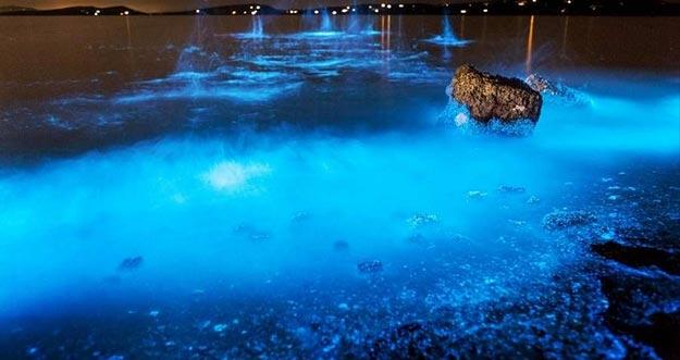 Fenomena Laut Mengagumkan Yang Bisa Membuat Kamu Kagum