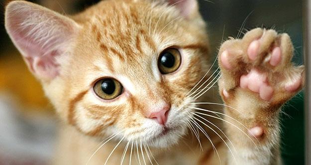 7 Penjelasan Ilmiah Tentang Sifat Kucing Rumah