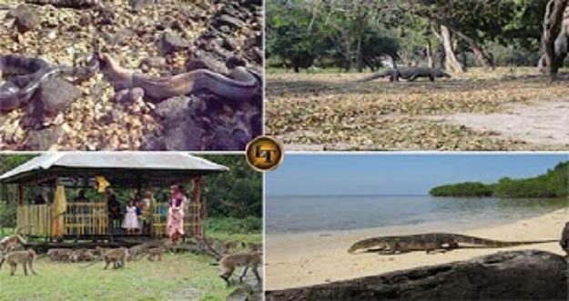 4 Pulau Di Indonesia Yang Didominasi Oleh Hewan Liar