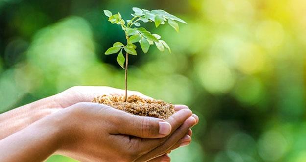 10 Cara Memulai Gaya Hidup Ramah Lingkungan