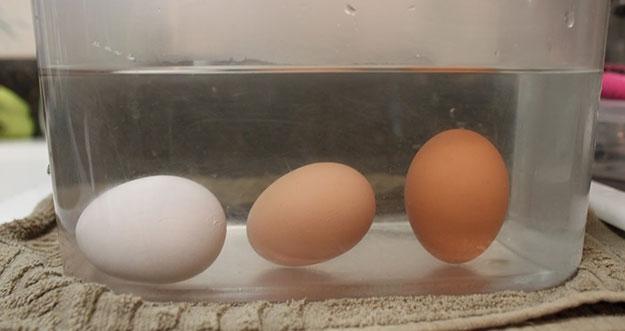 Bagaimana Cara Mendeteksi Telur Yang Rusak Sebelum Dimasak?