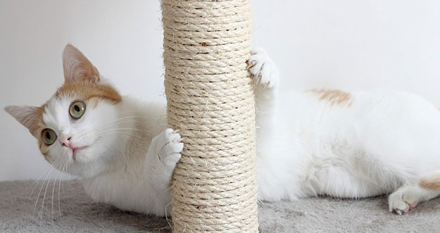 Alasan Mengapa Kucing Menggaruk Furnitur