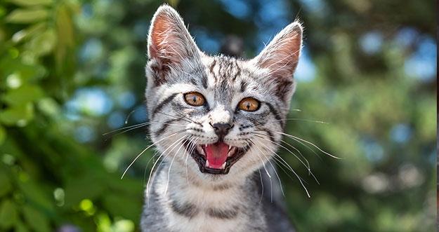 Alasan Kucing Suka Merusak Barang Di Rumah