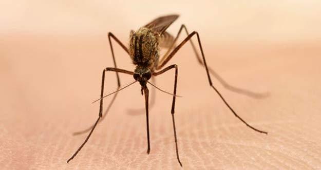 Hati-Hati Orang Tipe Seperti Inilah Yang Disukai Nyamuk