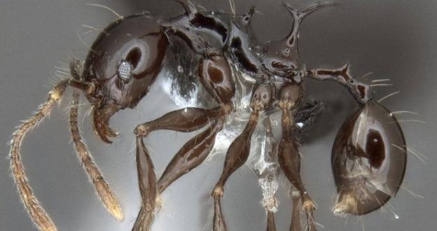 10 Penemuan Spesies Baru Di Tahun 2017
