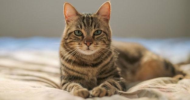 4 Hal Yang Benar-Benar Dibenci Oleh Kucing