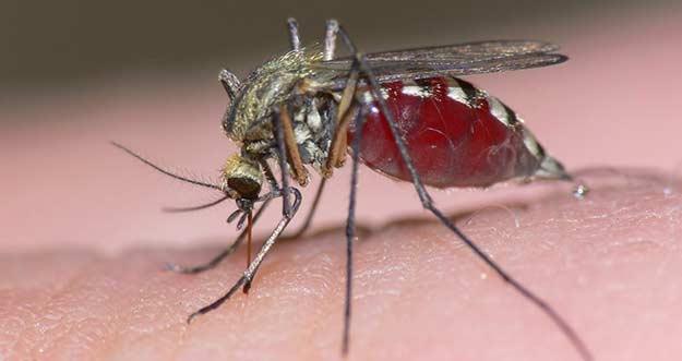 Lindungi Anak Dari Nyamuk Dengan Minyak Telon