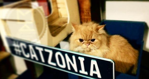 Baru Di Malaysia Ada Hotel Bintang 5 Pertama Bagi Kucing