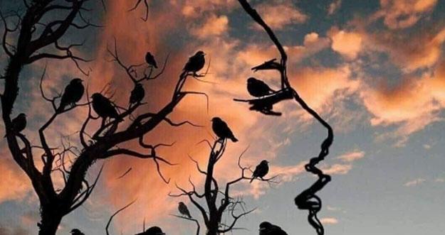 Tes Kepribadian: Gambar Pohon dan Burung atau Wajah Yang Pertama Dilihat?