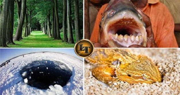 6 Penelitian Yang Berhasil Ungkap Rahasia Alam Semesta