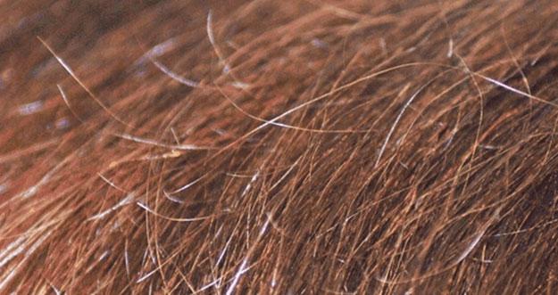5 Tips Mencegah Rambut Bercabang
