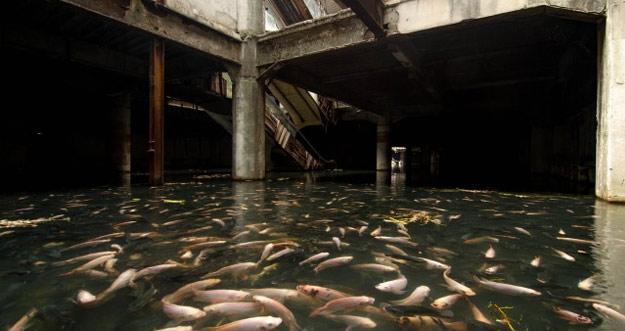 Wow, Ribuan Ikan Memenuhi Mal Perbelanjaan Bangkok Yang Sudah Ditinggalkan