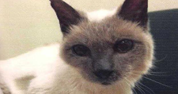 Berumur 30 Tahun, Kucing Ini Menjadi Kucing Tertua Di Dunia