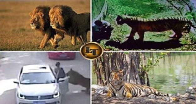 5 Kisah Manusia Tewas Diserang Hewan Buas di Kebun Binatang