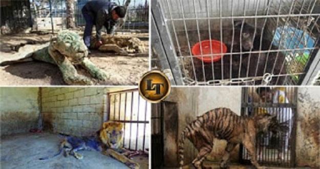 7 Foto Kekejaman Manusia Terhadap Hewan