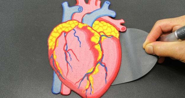 Fakta Menarik Tentang Jantung Yang Perlu Kalian Ketahui