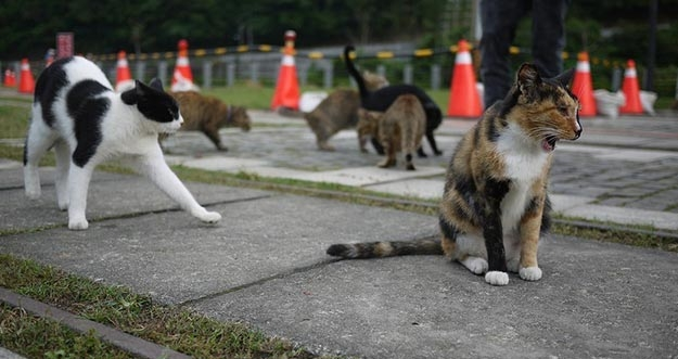 Cat Village, Destinasi Wajib Pecinta Kucing Di Taiwan