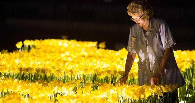 Ajaib! Ada Bunga Yang Bisa Bercahaya Di Inggris
