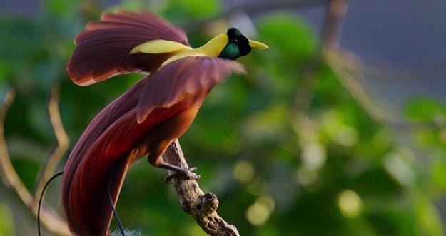 10 Hewan Asli Indonesia