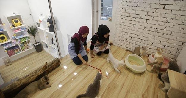 Hotel Berbintang Lima Untuk Kucing