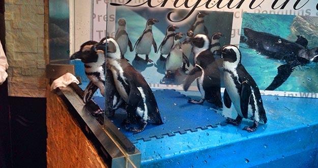 Bar Penguin Penghilang Rasa Stress