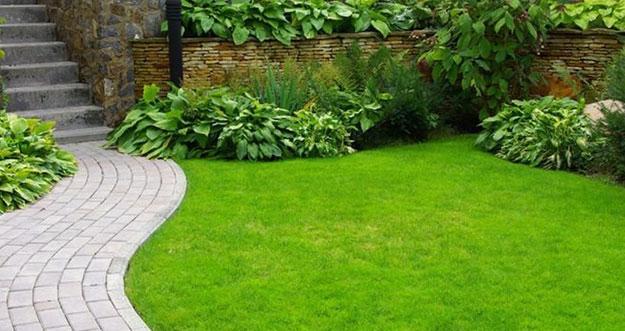 10 Jenis Rumput Taman dan Harganya