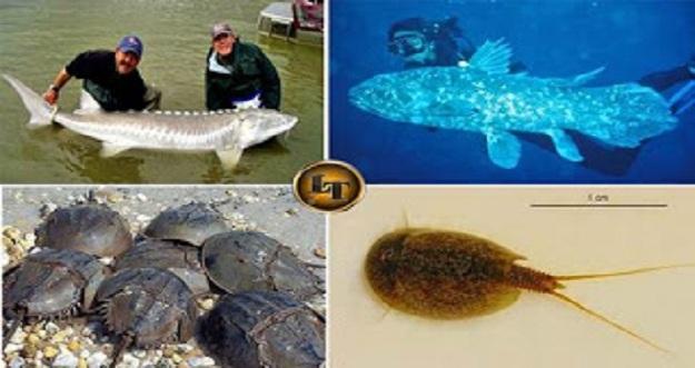10 Makhluk Hidup Paling Tua di Bumi