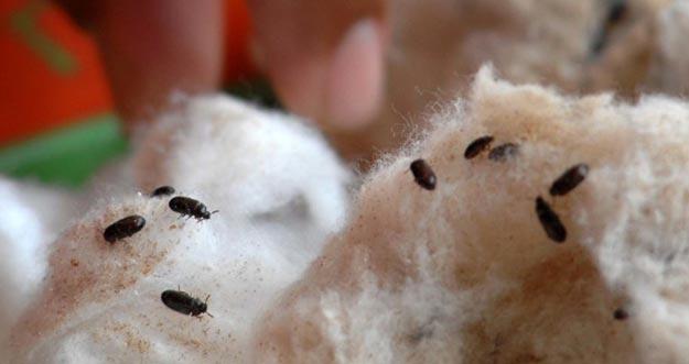 8 Manfaat Penting Semut Jepang Bagi Kesehatan
