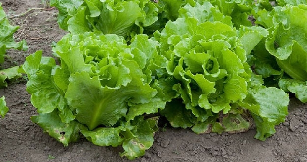 5 Bahan Makanan Yang Tidak Perlu Dibekukan