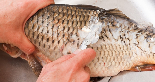 4 Tips Membersihkan Sisik Ikan