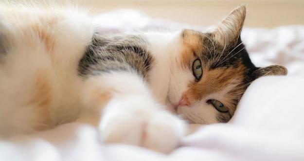 10 Hal Yang Dibenci Kucing