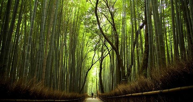 Tempat Wisata Favorit Turis Ketika Pergi Ke Jepang